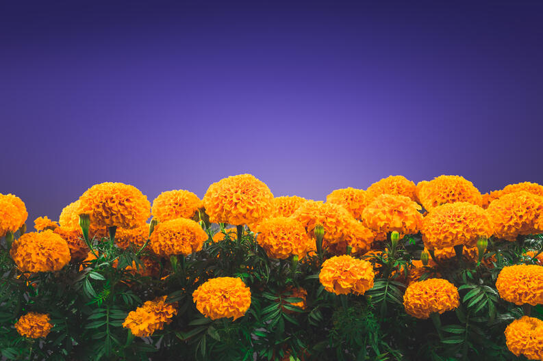 This Is The Reason Orange Flowers Are A Huge Deal On Day Of