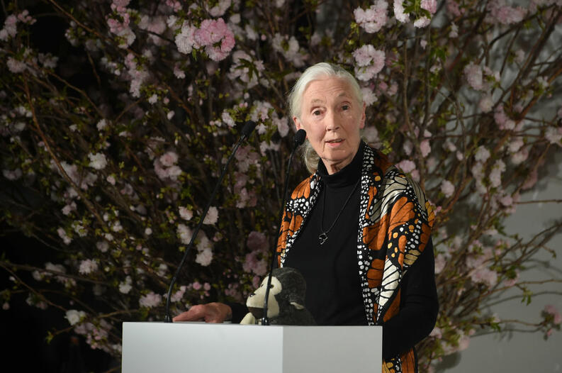 jane goodall getty 665491952