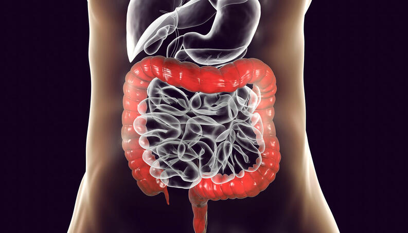 intestino sindrome corpo 0519 1400x800